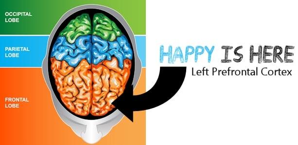 storytelling frontal lobe-min